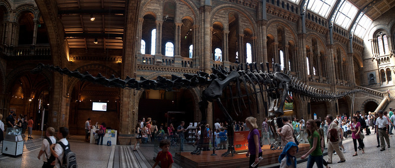 Diplodocus panorama, London, UK<br /> <br /> Olympus E-420 & Zuiko 12-60/2.8-4.0