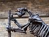 Megatherium, London, UK<br /> <br /> Olympus E-420 & Zuiko 12-60/2