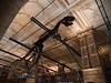 Allosaurus, London, UK<br /> <br /> Olympus E-420 & Zuiko 12-60/2.8-4.0