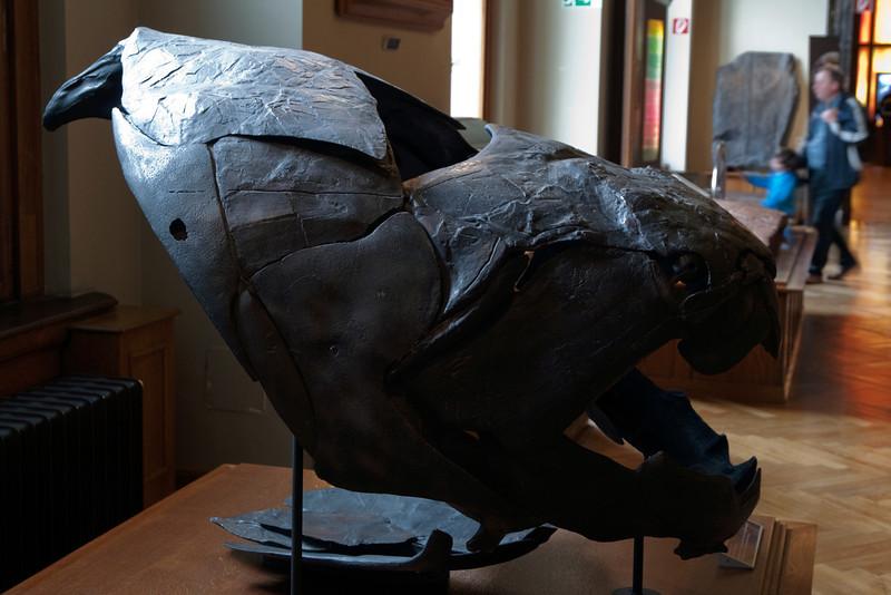 Dunkleosteus (Devonian), placoderm