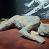 Pompeii Exhibit at OMSI, Body Cast