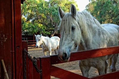Los Alamitos Ranch-14