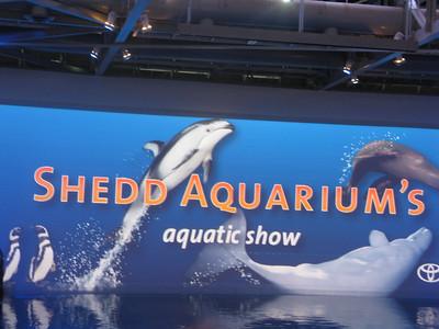 Shedd Aquarium's aquatic show
