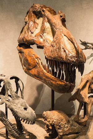 Prehistoric Journey Exhibit, Denver Natural History Museum, Denver, Colorado