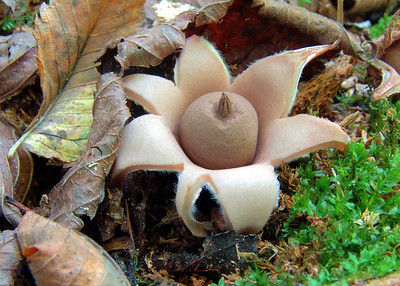 This is an earthstar.