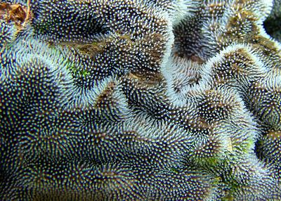 Ceratiomyxa fruticulosa.