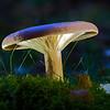 Mushroom, Stockholm Sweden
