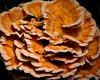 Tree Fungi 8x10_103
