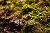 Wild mushrooms at Denny Creek