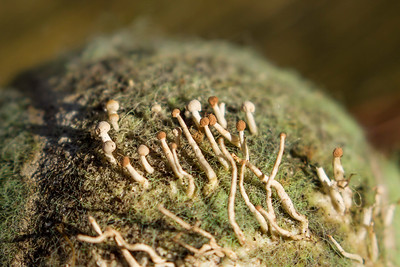 Coral and Club Fungi