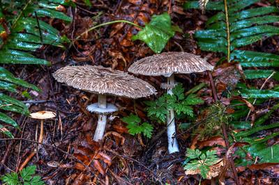 wild-forest-mushrooms