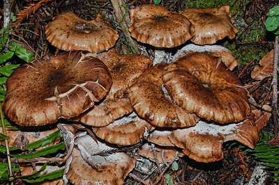 forest-mushrooms-8