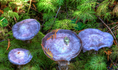 forest-mushrooms-1