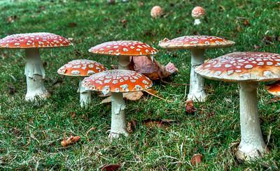 magic-mushrooms-1