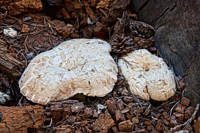 forest-mushrooms-