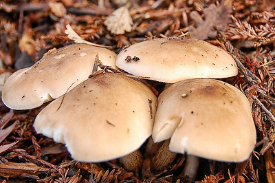 forest-mushrooms-11