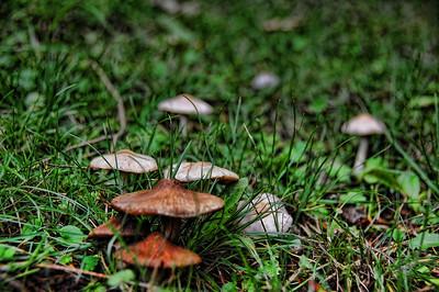 mushrooms-grass-2