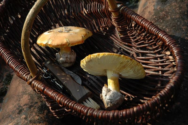 Caesar mushrooms