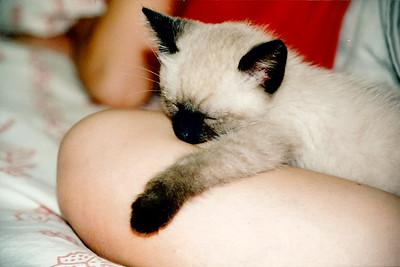 Mushu melts mommy by falling asleep on her leg