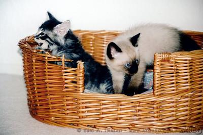Mushu joins Meeko, who appears to enjoy biting the basket