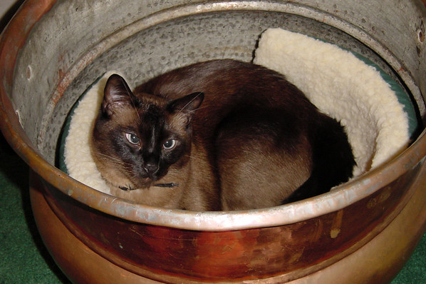 His purr reverberates inside the pot