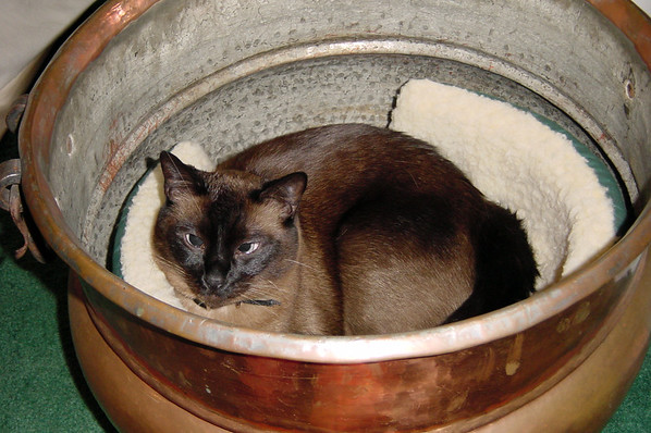 AUGUST - Mushu in the copper pot