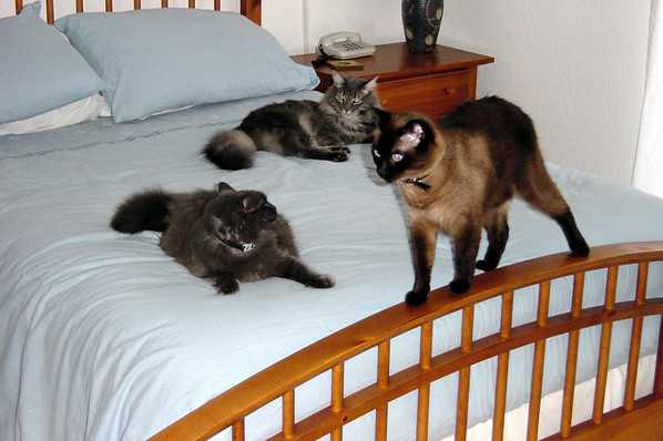 SEPTEMBER - Bella, Meeko, and Mushu on bed