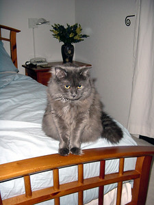 JULY - Bella sits at the end of the bed