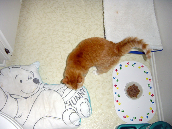 Punkin wanders about the floor of our guest bathroom