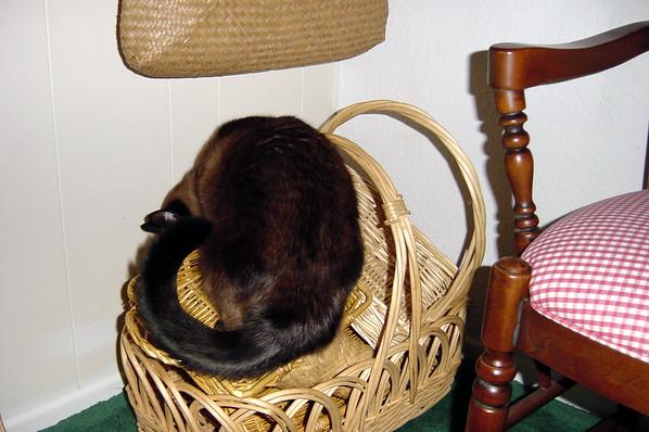 Mushu and the basket