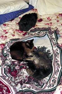 Babies on a blanket