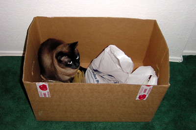 Mushu in the box