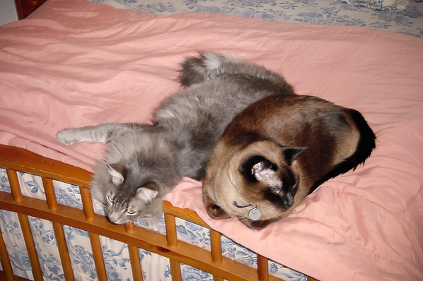 JANUARY - Meeko and Mushu on bed together