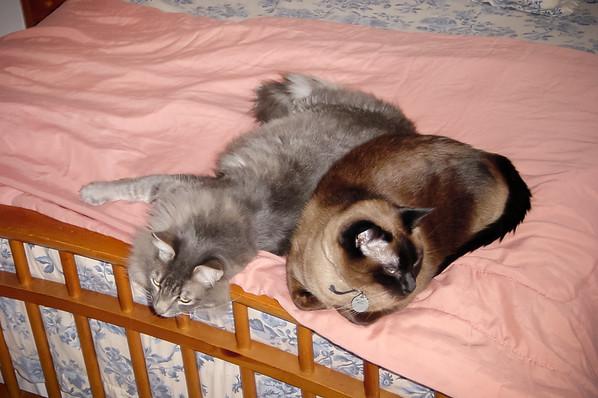 JANUARY - Meeko and Mushu on bed together