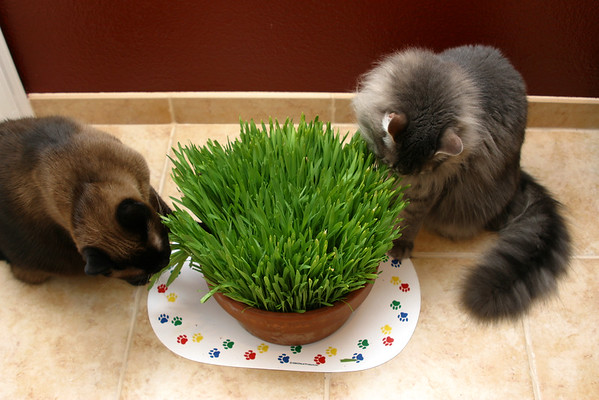 Mushu and Meeko eat grass