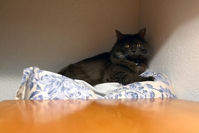 Bella on pillow in corner