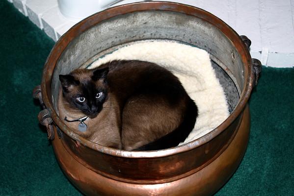 Mushu in copper pot (far)