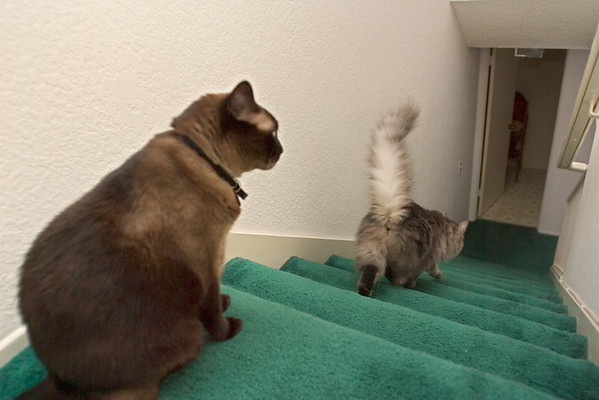 Meeko decides to head down first...