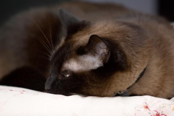 Mushu takes a nap