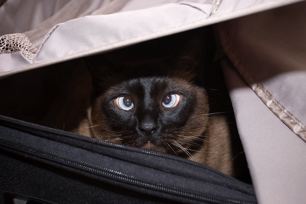 Time to let the cat out of the bag