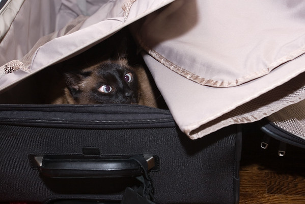 Someone is trying to stowaway