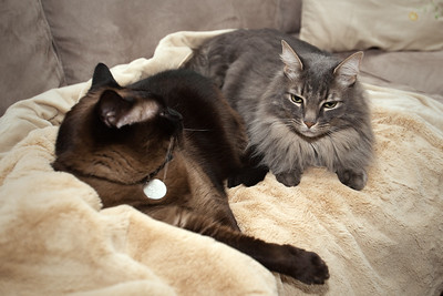 MARCH - A few hours after guests from Isa's baby shower depart, Mushu and Meeko return to the family room sofa