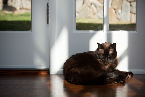 This morning, however, I think he is simply enjoying the warmth of the sun