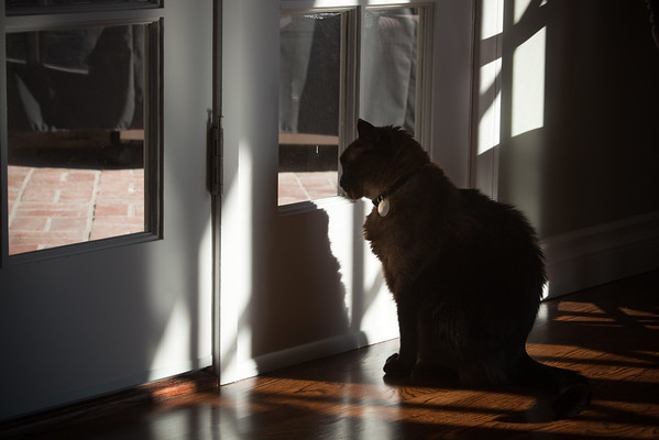When I run, sometimes Mushu looks out of this window, waiting for me to return