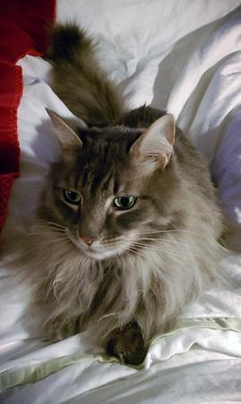 Meeko on the bed