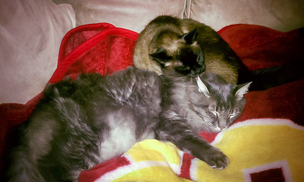 JANUARY - Mushu bathes Meeko, proving he is not always a taker