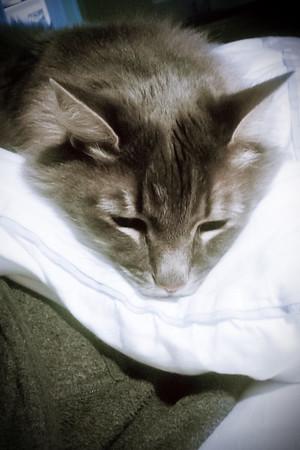 Comforter plus leg equals great pillow