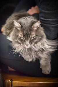 Meeko on Mommy's lap