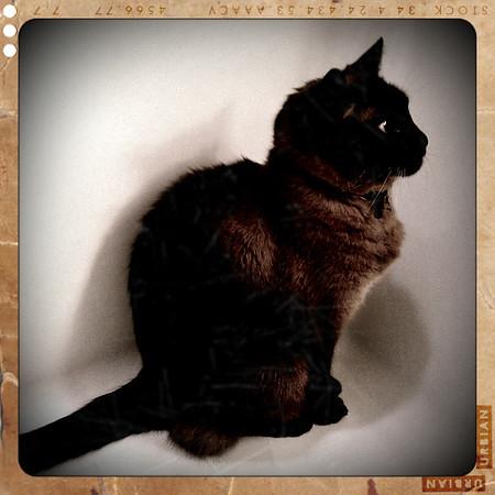 Mushu in the tub