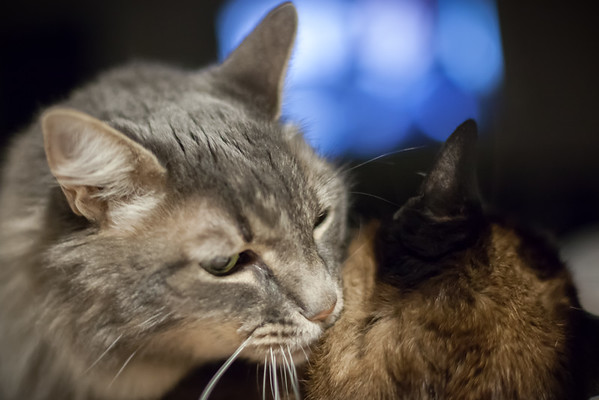 NEW LENS (still getting used to the narrow depth of field at F1.4) - Meeko moves in for the kill